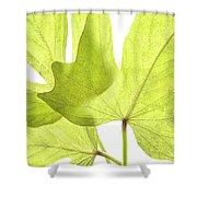 Three Green Leaves Shower Curtain