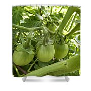Three In A Row Green Tomatoes Shower Curtain
