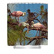Three In A Tree Shower Curtain