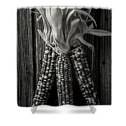 Three Indian Corn In Black And White Shower Curtain