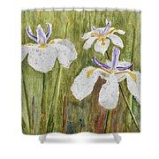 Three Irises In The Rain Shower Curtain