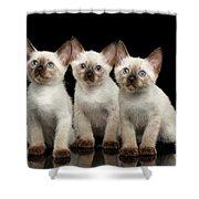 Three Kitty Of Breed Mekong Bobtail On Black Background Shower Curtain by Sergey Taran