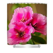 Three Little Beauties Shower Curtain