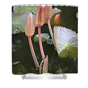Three Lotus Buds Shower Curtain