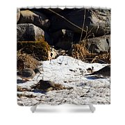 Three Mourning Doves Shower Curtain