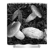 Three Mushrooms Shower Curtain