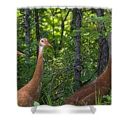 Three On A Walk Shower Curtain