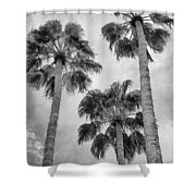Three Palms Bw Palm Springs Shower Curtain