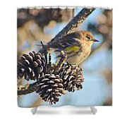 Three Pine Cones And A Little Bird Shower Curtain