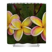 Three Pink And Yellow Plumeria Flowers - Hawaii Shower Curtain