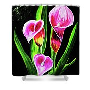 Three Pink Calla Lilies. Shower Curtain