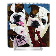 Three Playful Bullies Shower Curtain