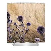 Three Purple Echinops Shower Curtain by Helga Novelli