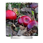 Three Red Apples Shower Curtain