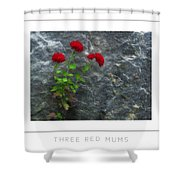 Three Red Mums Poster Shower Curtain