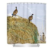 Three Roosters Shower Curtain
