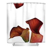 Three Rust Calla Lilies Shower Curtain