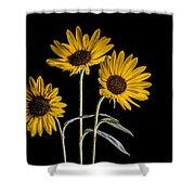Three Sunflowers Light Painted On Black Shower Curtain