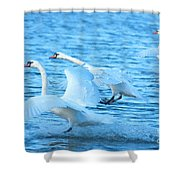 Three Swans Shower Curtain