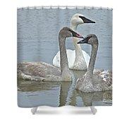 Three Swans Swimming Shower Curtain