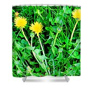 Three Tenders Shower Curtain