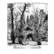 Three Trees Bw Shower Curtain