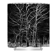 Three Trees In Black And White Shower Curtain