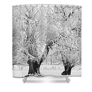 Three Trees In The Snow - Bw Fine Art Photography Print Shower Curtain