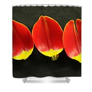 Three Tulip Petals Shower Curtain
