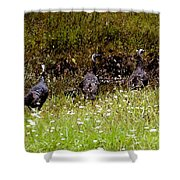 Three Turkeys Shower Curtain