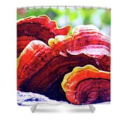 Three Upon A Tree Shower Curtain