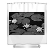 Three Water Lilies  Shower Curtain