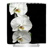 Three White Orchids Shower Curtain
