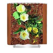 Three White Tulips Painting Shower Curtain