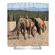 Three Wild Mustangs Shower Curtain