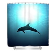 three year old Dolphin  Shower Curtain by Hagai Nativ