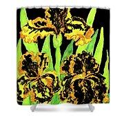 Three Yellow-black Irises, Painting Shower Curtain
