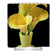 Three Yellow Calla Lilies Shower Curtain