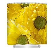 Three Yellow Daisies  Shower Curtain by Garry Gay