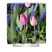 Three Young Tulips Shower Curtain