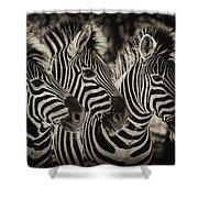 Three Zebra Shower Curtain
