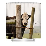 Threshold Guardian Shower Curtain