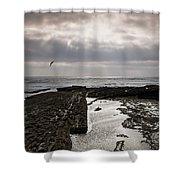 Throne Of Seagulls Shower Curtain