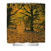 Through The Fallen Leaves Shower Curtain