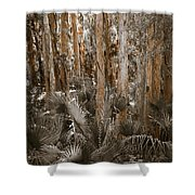 Through The Forest Trees Shower Curtain