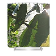 Through The Sea Grape Leaves Shower Curtain