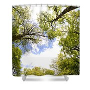Through The Tree Tops Shower Curtain