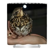 Thrush Shower Curtain