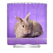 Thump Gorgeous Dwarf Rabbit Stamps His Foot  Shower Curtain