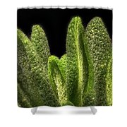 Thyme Leaves Shower Curtain